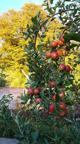colclough waled garden