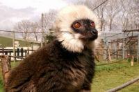 Secret Valley Wildlife Park Lemur